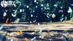 Be amazed at the butterfly season in Cuc Phuong National Park