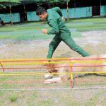 Cách huấn luyện chó tại nhà cực kỳ đơn giản