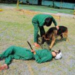 Dịch vụ huấn luyện chó cảnh khuyển uy tín tại Tphcm